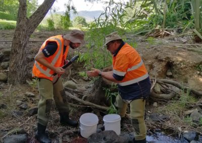 Auckland Stream Remediation – Fish Relocation